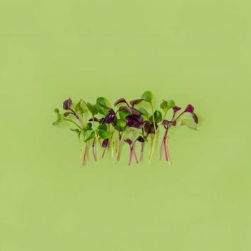 Microgreens Mix