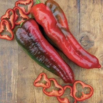 Italian Roasting Peppers