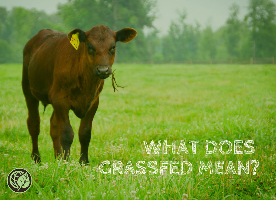 What is Grassfed?
