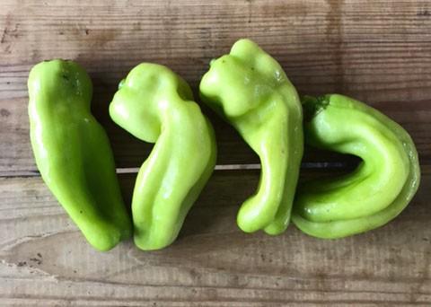 Cubanelle Peppers 1 lb
