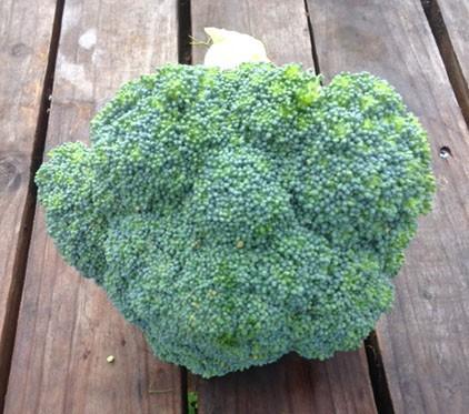 Broccoli 2 lb