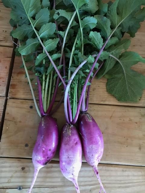 Purple Daikon Radish without Greens (2 lbs)