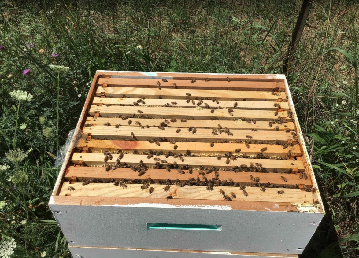 A closer look at the importance of organic beekeeping, with Elam Beiler!