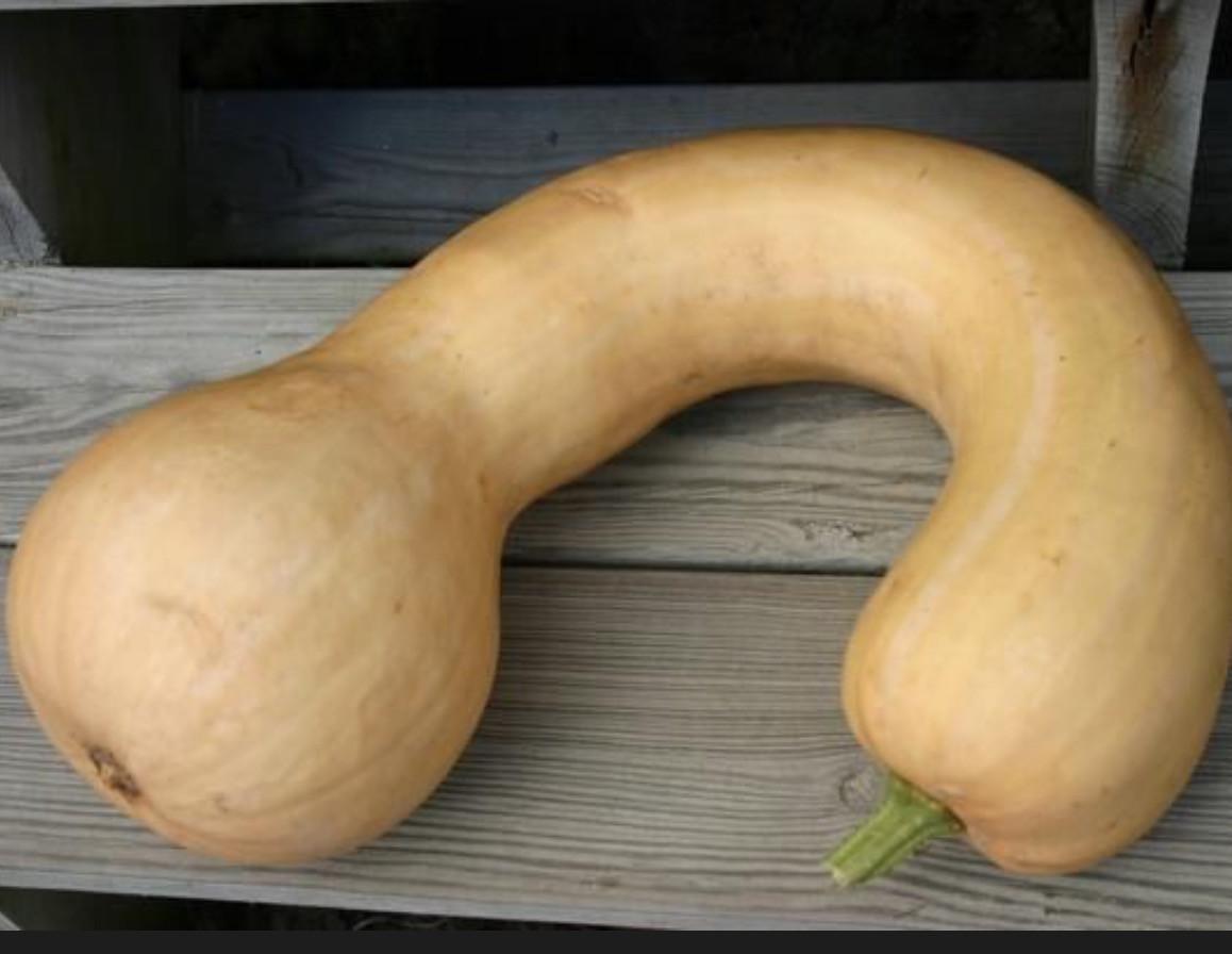 Long Neck Pumpkin