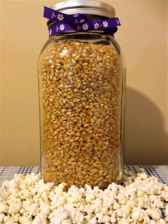 1/2 gallon jar Lady Finger Popcorn-  Open Pollinated