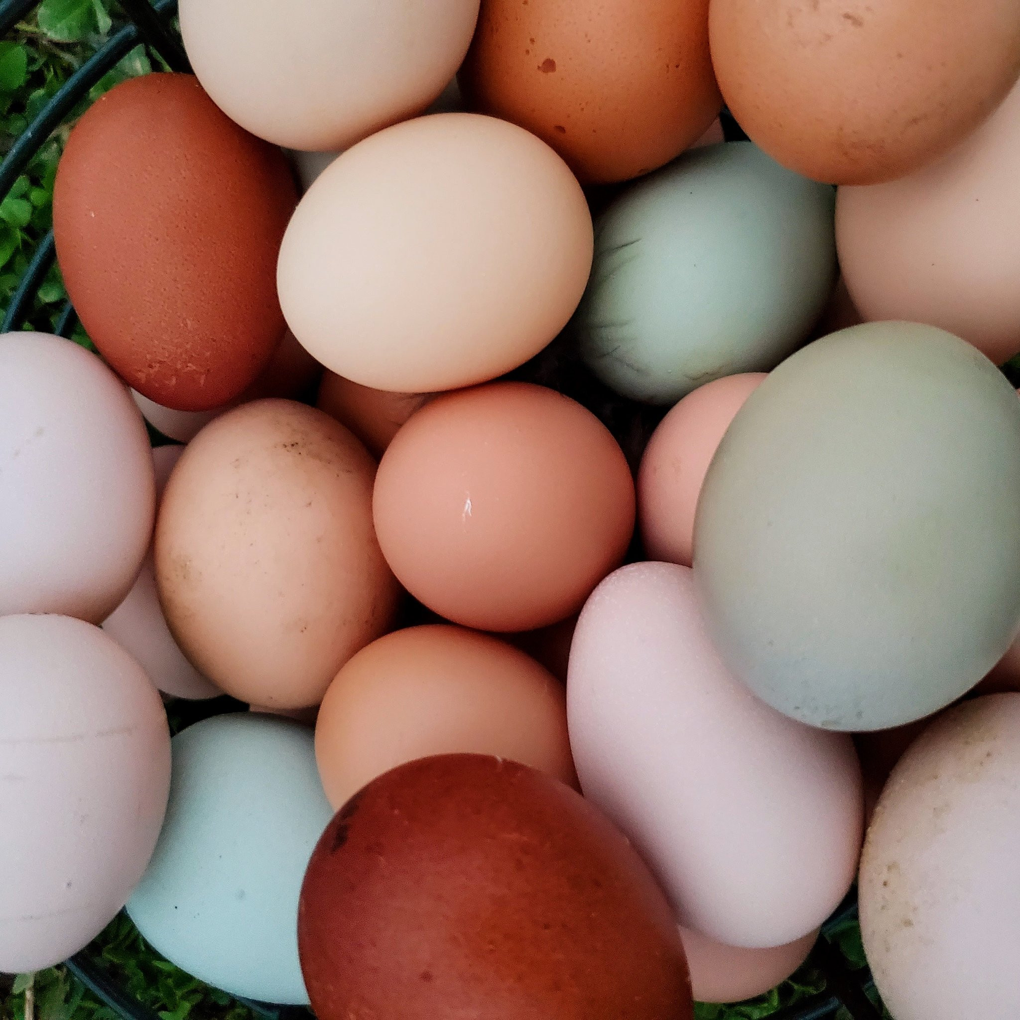 Dozen Large/XL Pasture Raised Eggs