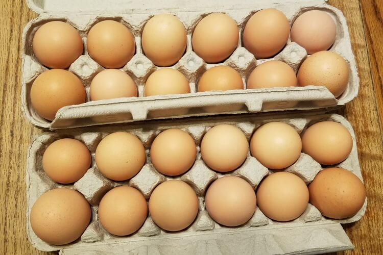 Eggs from Hens on Pasture