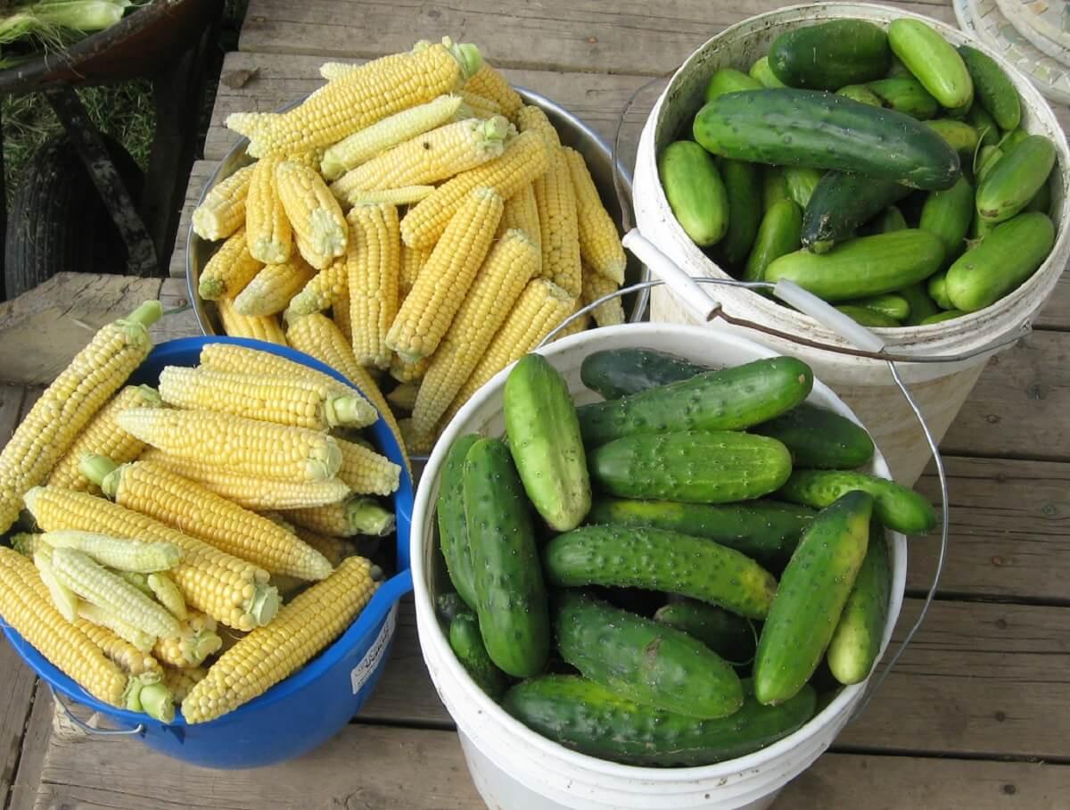 Gardening Tips for Growing Vegetables