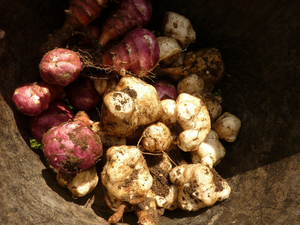 Seed Spotlight: Jerusalem Artichokes