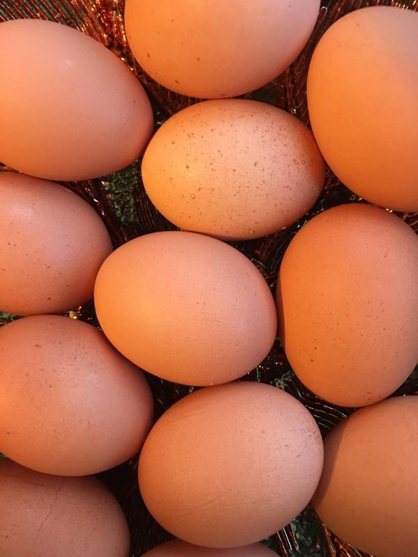 Pasture Raised, GMO Free Eggs