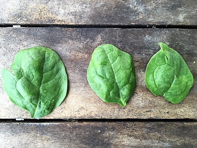 Organic Young Spinach