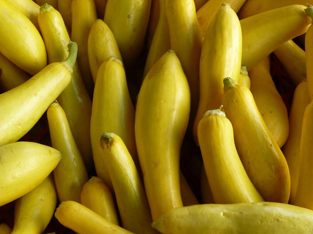 LOCAL Yellow Squash