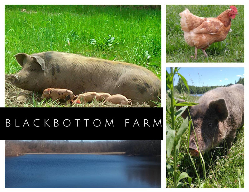 BBFC-Farm-Day-Image_edited.jpg