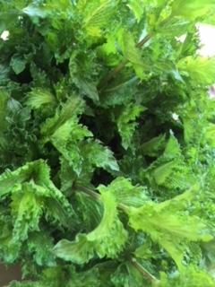 Organic Fresh Mint