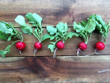 Organic Easter Egg Radishes
