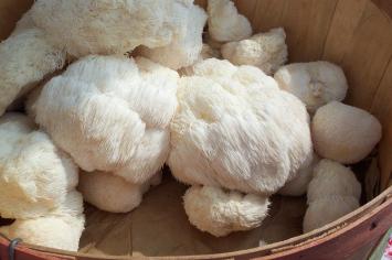 Lion's Mane Mushrooms