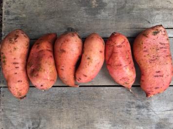 Organic Beauregard Sweet Potatoes