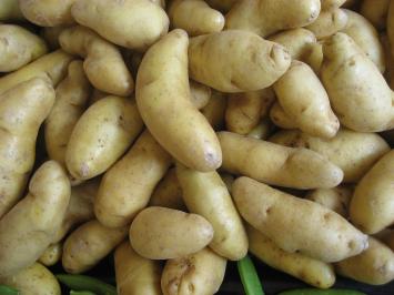 Organic Russian Fingerling Potatoes