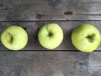 IPM Granny Smith Apples
