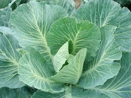 Collard Greens - organic