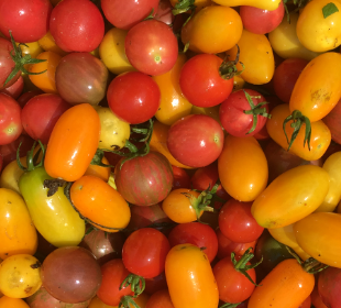 Bumblebee Cherry Tomatoes