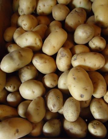 Organic Yukon Gold Potatoes (medium)
