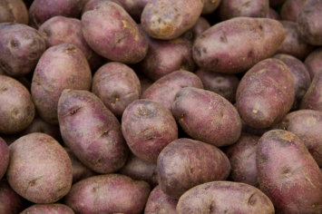 Purple Fingerling Potatoes