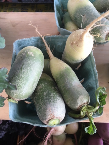 Fall Radishes (organic practices)