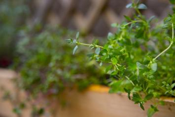 Fresh Thyme (organic practices)