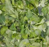 Organic Young Mustard Greens