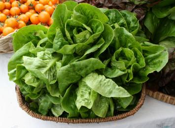 "Organic ""Little Gem"" Mini Romaine Lettuce Heads"