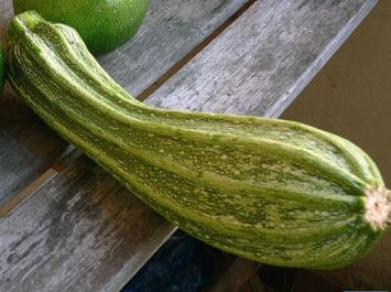 Organic Striped Romanesco Zucchini