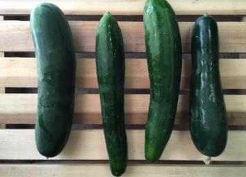 Organic  Diva Cucumbers