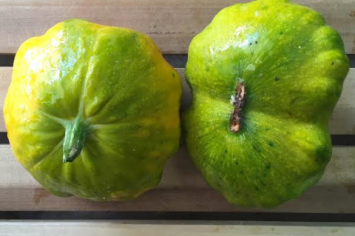 Organic Baby Yellow and Green Patty Pan Squash