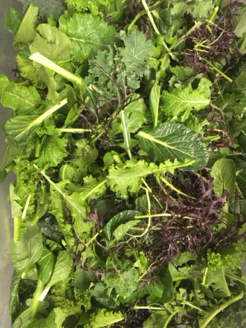 Organic Bunched Young Saute Greens