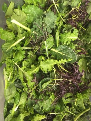 Organic Saute Greens
