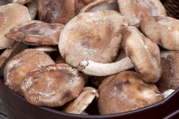 Organic Shitake Mushrooms