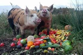 Daisy's Farm Friend's Sanctuary - Fruits and Veggies