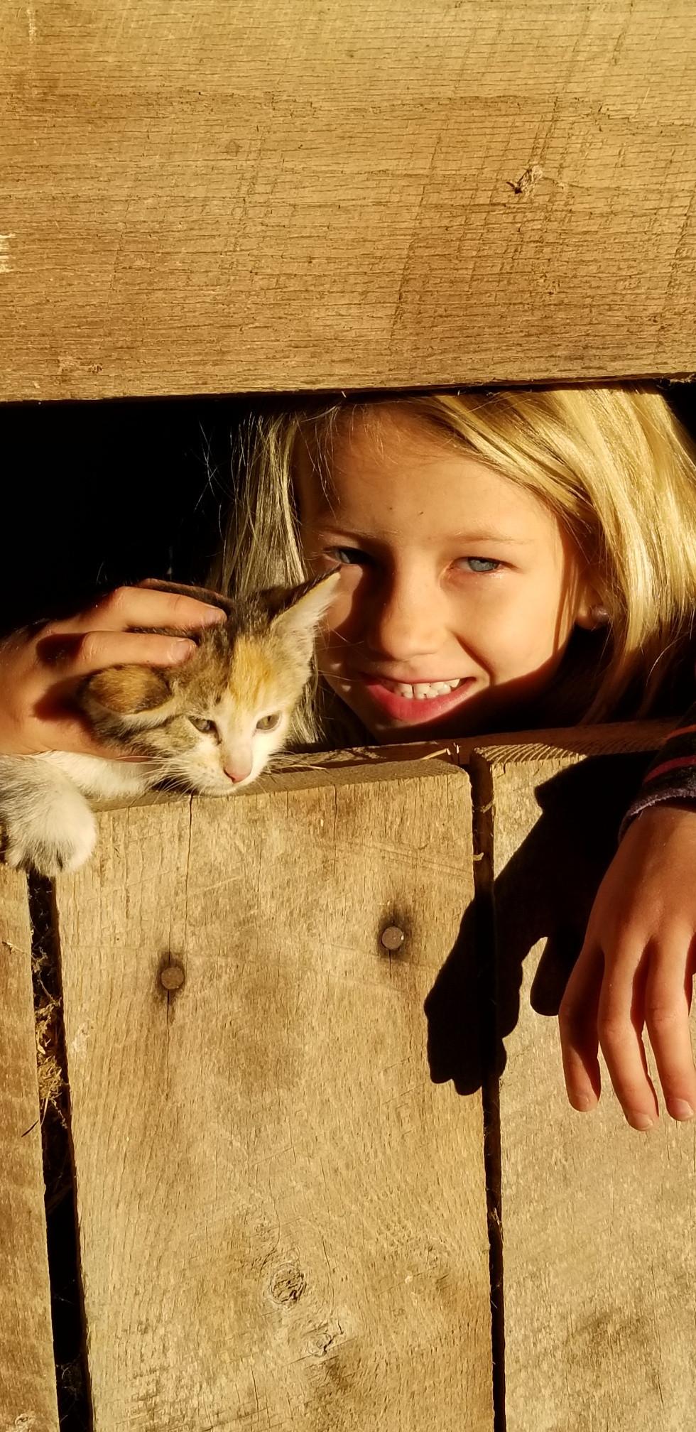 Kitten+-+Copy.jpeg