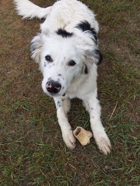 Grassfed Beef Dog Bones
