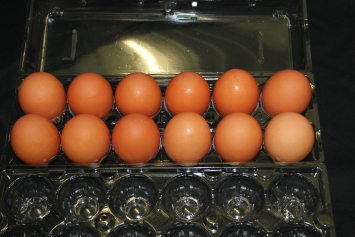 Dozen Unsized/Ungraded Eggs