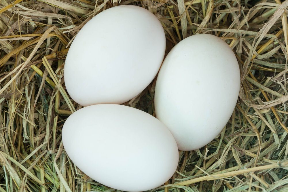 Duck Eggs - Dozen