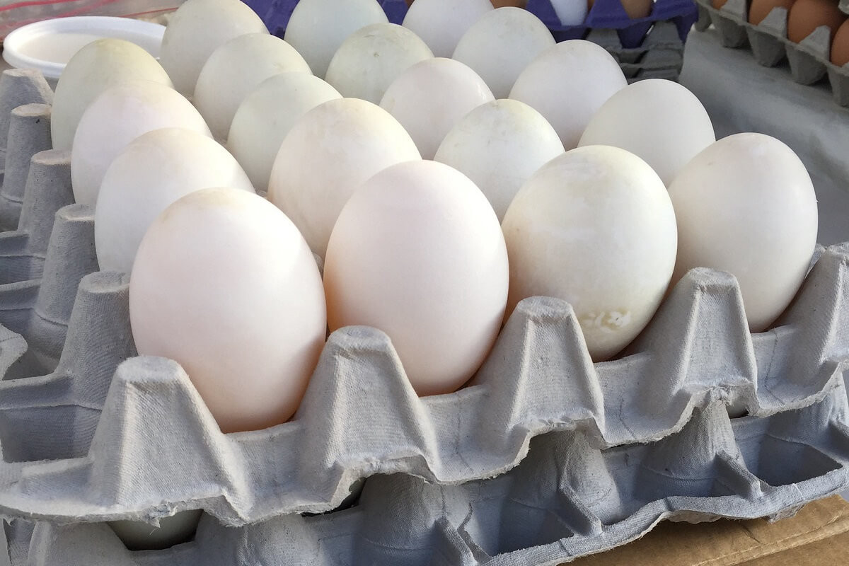 Duck Eggs, split 6. 5 dozen