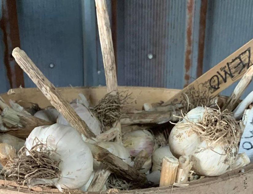Garlic, Zemo