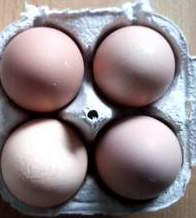 Chicken Eggs 4 Donation