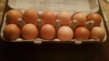 Chicken Eggs - Case of Flats 15 dz