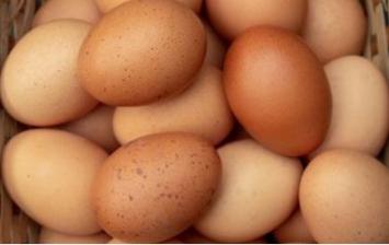 Eggs - soy free