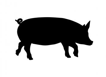 Sandy Hill Winter CSA 2018/2019 - Pasture Berkshire Pork