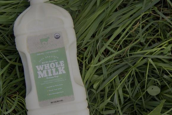 Dairy & Milk
