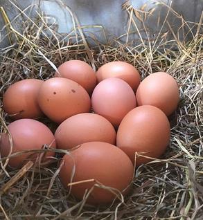 Pasture Raised Eggs